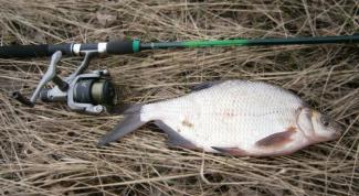 Секреты рыбалки: прикормка для леща своими руками