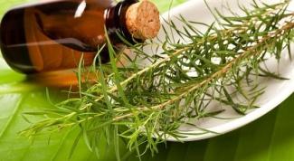 Масло чайного дерева - применение и свойства