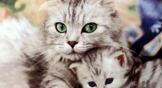 Язык кошек: как понять хвостатого друга