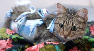Можно ли стерилизовать не рожавшую кошку