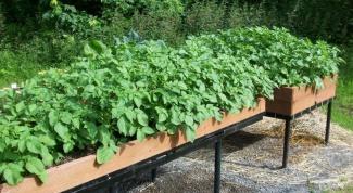 Как выращивать картошку вертикальным способом