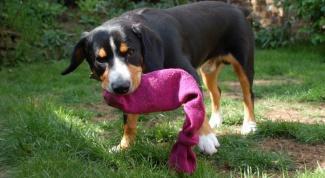 Как сделать игрушки для собак своими руками