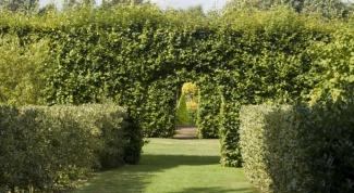 Какие выбрать высокие кустарники для живой изгороди