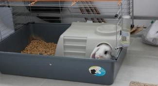 Какими должны быть клетки для декоративных кроликов