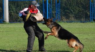 Дрессировка собак в домашних условиях: простые правила и приемы
