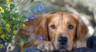 What are enteritis in dogs and how to treat them