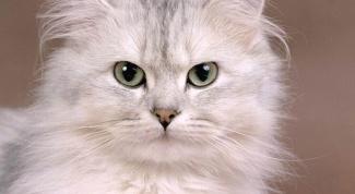 Как написать объявление о пропаже кота