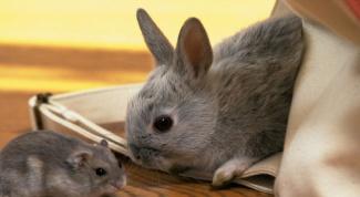 Oriental horoscope compatibility Rat and Rabbit