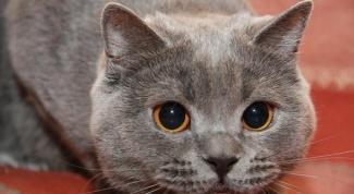 Что делать, если кот перестал есть