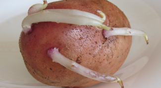 В чем польза картофельных ростков