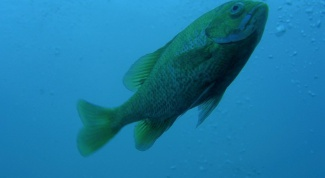 Секреты рыбалки: фидерная снасть на леща