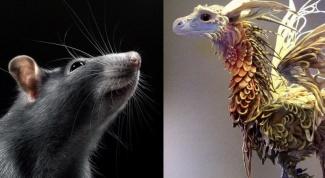 Восточный гороскоп совместимости: Дракон и Крыса