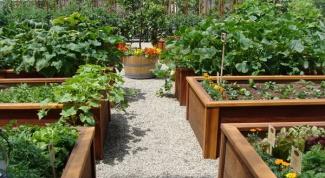 Как спланировать огород на даче