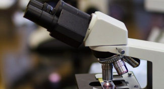 Микоплазма пневмонии: вид бактерий и болезнь