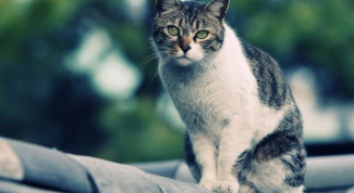 Cat not eating: possible causes