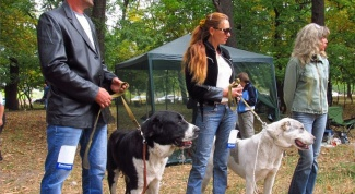 Как выставить собаку на соревнования