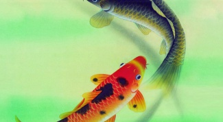 Breeding fish at home as a business