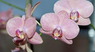 Как помочь орхидее повторно зацвести