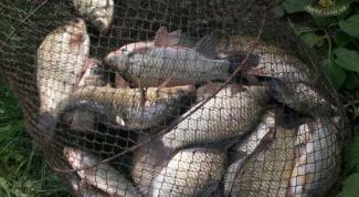 Как правильно выбрать садок для рыбалки