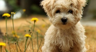 Препараты от клещей для собак