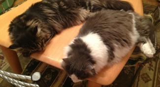 Как отучить кошку спать на кухонном столе
