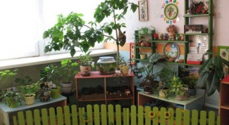 How to create a corner of nature