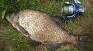 Секреты рыбалки: донка из спиннинга