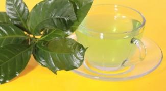 Влияет ли зеленый чай на работу почек