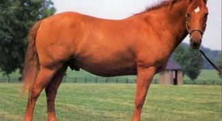 Какие есть породы лошадей