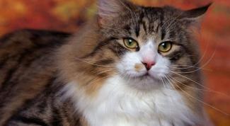 Какие кошки подходят для аллергиков