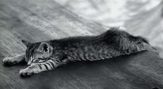 Как лечить уши коту