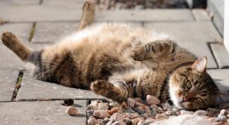Как кормить кота при сахарном диабете