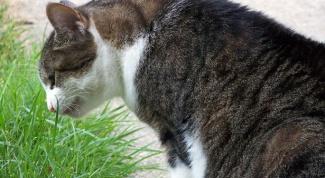 Что делать, если кота рвет