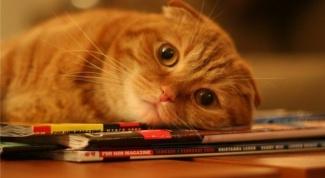 Как меняется поведение кошки после стерилизации