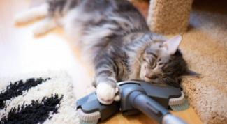 Как определить, что кот глухой