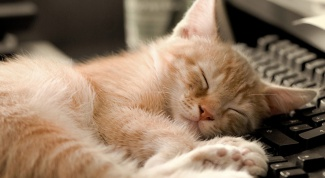 Почему кошка постоянно спит