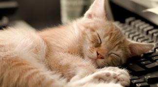 Why the cat always sleeps