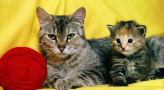 Почему кошка не кормит котенка