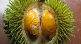 Дуриан - тайская экзотика
