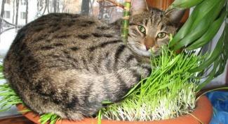 Гамавит для кошки: показания и способы применения
