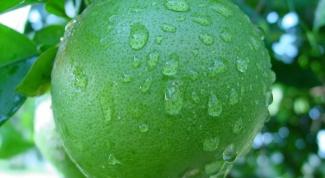 Свити: полезные свойства нового экзотического фрукта