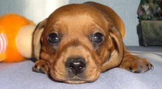 Кличка для собаки-кобеля: какую выбрать