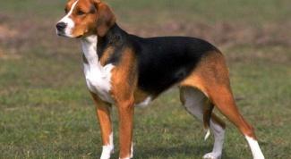 Гамавит для собак: способ применения