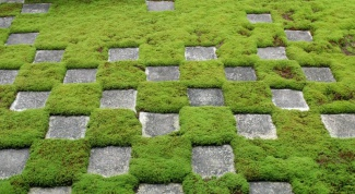 What kind of moss grows best on the rocks