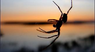 Где обычно в квартирах живут пауки