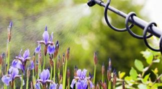 Как правильно поливать грядки