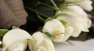 How to grow shrub roses: planting and care