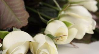 Как выращивать кустовые розы: посадка и уход