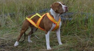 How to choose a harness