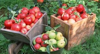 Как делать моченые яблоки